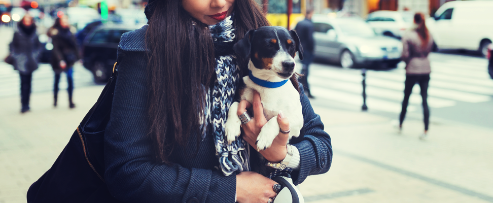 office etiquette: what to know before you bring your pet to work