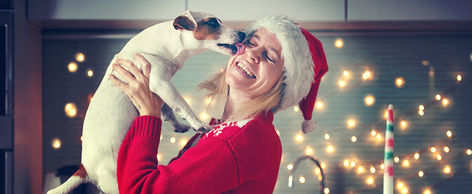 The most important commands to teach dogs for the holidays.